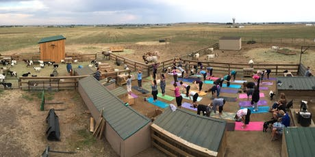 Baby Fainting Goat Yoga - Friday Happy Hour Classes tickets