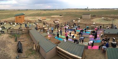 Baby Fainting Goat Yoga - Sunday Classes