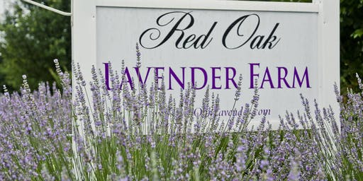 5th Annual Red Oak Lavender Festival