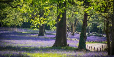 Wild Singing Workshop (adults) with Janice M @ Bluebell Festival