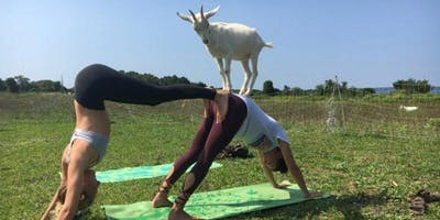 Goat Yoga with Christine Reed and Karla Simmons