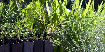Australian native plants for small gardens, patios and pots