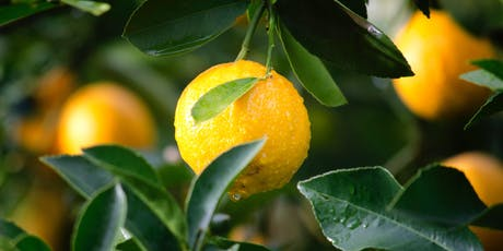 Caring for Citrus in your Garden, Age 18+, FREE tickets
