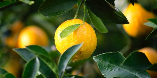 Caring for Citrus in your Garden, Age 18+, FREE