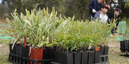 Community Planting Day - Thomas Oval Bushland