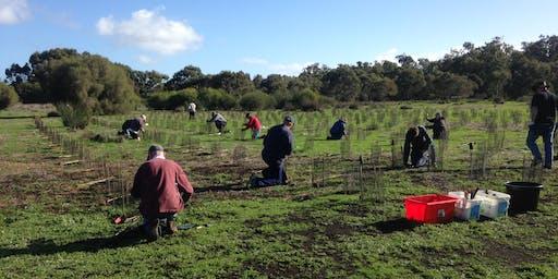 Community Planting Day - Lake Magenup Wandi