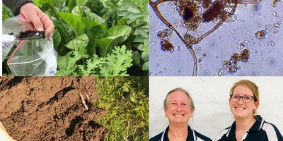 Get the Dirt on Healthy Soils under the Microscope