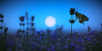 Nocturnal Nature
