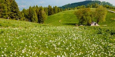 I prati fioriti di Lentiai