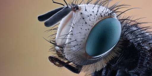 Are you bug body ready? How to survive parasites and insects