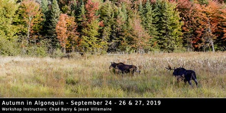 Autumn in Algonquin 2019 - Photo Workshop with Chad Barry & Jesse Villemaire tickets