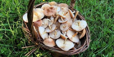 Cambridgeshire, Huntingdon, Autumn Wild Food Foraging Course Walk tickets