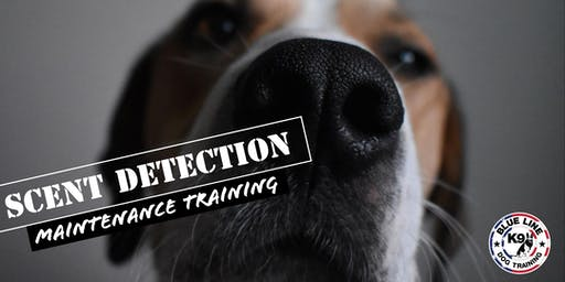 Scent Detection Maintenance Training
