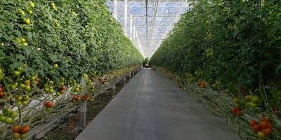 Sunshine Skillet Greenhouse Tour