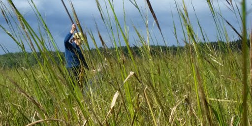Wild Rice Harvest on the Wisconsin River