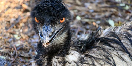 The Disaster Dialogues: The Emu Wars