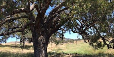 Canberra Tree Week Symposium 2019