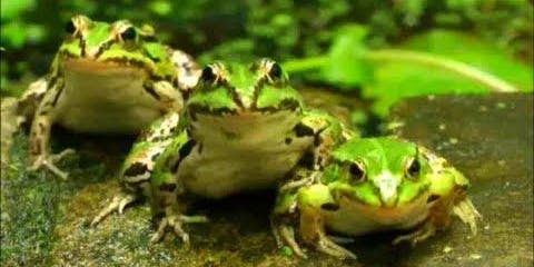 Amphibians: From Egg to Frog