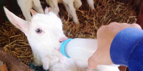 Bottle Feed Baby Goats - Timed Ticket Needs to be Purchased - 6pm tickets
