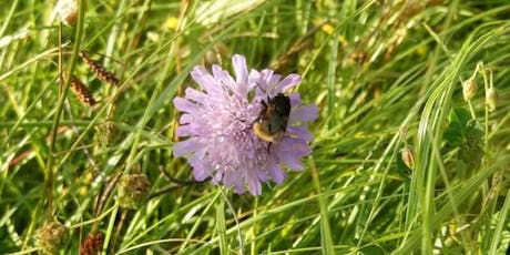Wild flower identification for improvers tickets