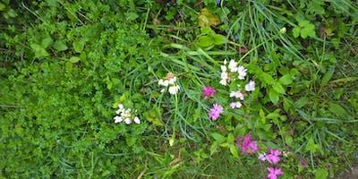 Wild Flower Walk in Tremayne Woods