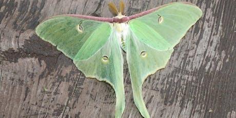 Magnificent Moths tickets
