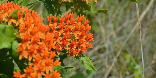 Summer Wildflowers at Lane
