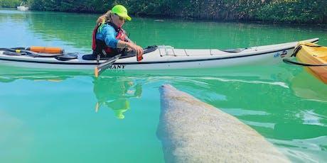 Manatee Photo Safari - Miami Kayak & Paddleboard Tour tickets