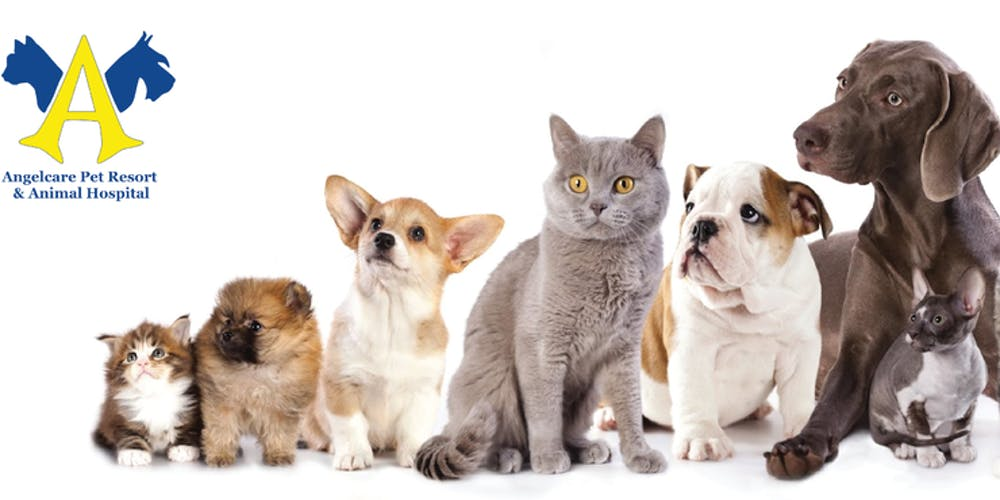 World Veterinary Day Pictures 2019