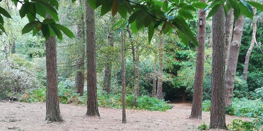 Peace in the Park -  Outside in nature,Inner peace meditations and forest bathe