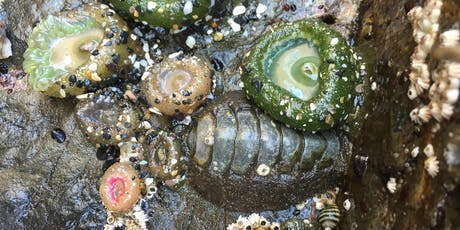 Oceanside Tidepool Discovery Day tickets