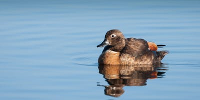Wetland bird workshop at Erskine Lakes, Erskine