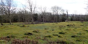 Thrang End and White Moss Invertebrate Recording Day
