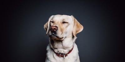 Top Dog Film Festival - Dorking - 30 October  2019
