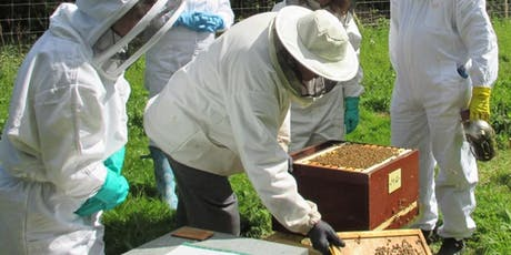Beekeeping Taster Day tickets