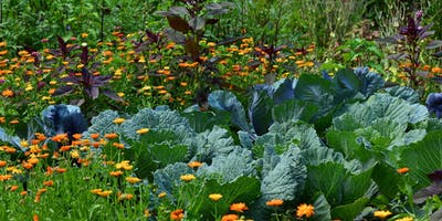 Potager en permaculture - Incredible Company
