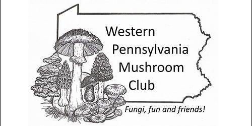 Summer Sycamore Island Fungus Hunt