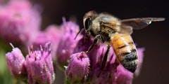 Plant Pursuit: Plants for Pollinators