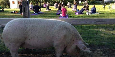 Farm Yoga, Let the Kid in You Play!!! - June 18th (Only Summer Class for Adults)