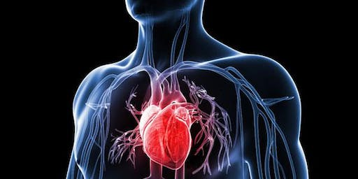 Your Nervous System Controls Your Heart