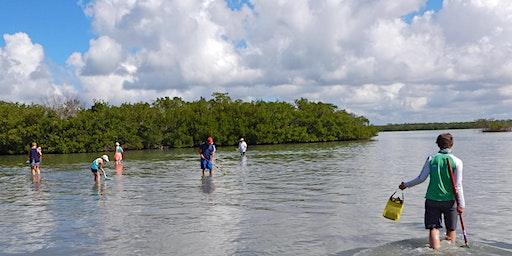 Estero Bay Aquatic Preserve Wading Trip