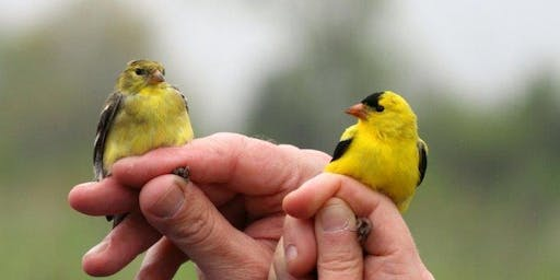 Bird in Hand! Migration and the Science of Bird Banding