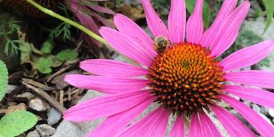 Plants & Permaculture w/Rhonda Baird