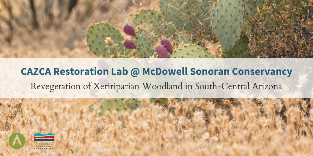 CAZCA Restoration Lab: Revegetation of Xeririparian Woodland in South-Central Arizona