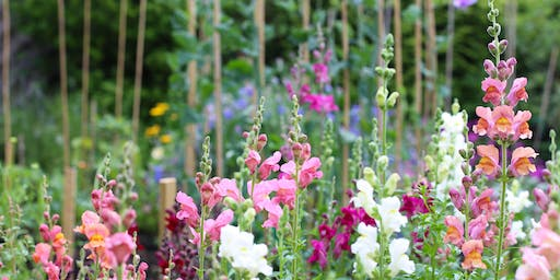 Learn How To Grow Your Own Cut Flowers Workshop SOLD OUT