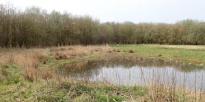 Bedford Moss and Windy Bank Invertebrate Recording Day