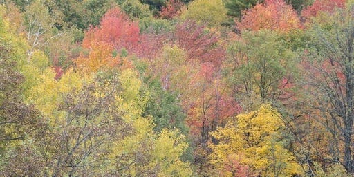 Celebrate the Colours of Fall in New Nature Reserve
