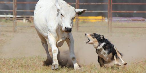 Miallo Working Dog Trial