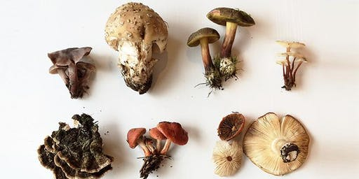 Mushroom Foraging: Identifying New England's Edible and Medicinal Mushrooms
