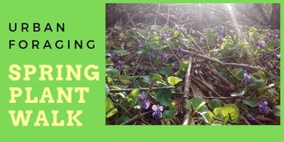 Urban Foraging: Spring Plant Walk - Stony Swamp, Ottawa